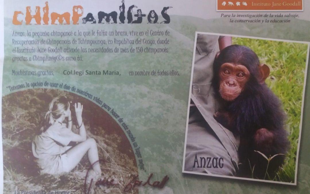 RECOMPENSA DE LES CAMPANYES DEL COMITÉ DE SOSTENIBILITAT